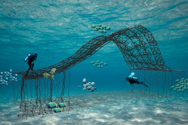 Save Wakatobi's Coral Reef