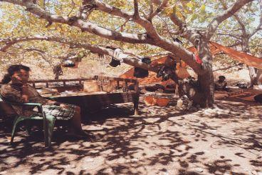 Donasi Tenda untuk Korban Gempa Alor