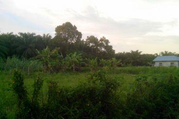 Waqaf Tanah  Pesantren Tahfid di Nagan Raya,Aceh