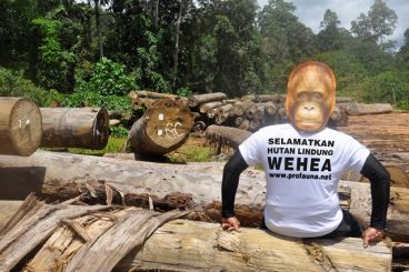Membantu Hutan Wehea Tetap Terjaga