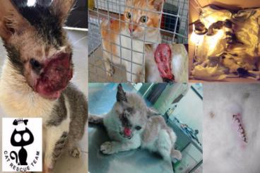 Sterilisasi Dan Rescue Kucing Jalanan di Batam