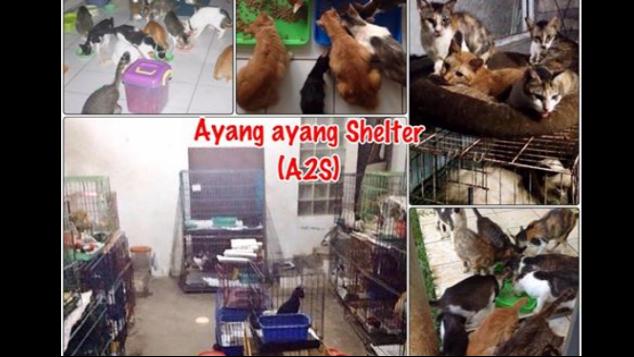 bantulah shelter untuk kucing terlantar A2S