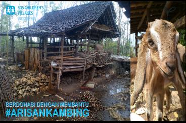 #PatunganKambing Produktif untuk Yogyakarta