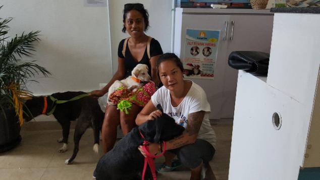 Bali Rescue Dog Squad