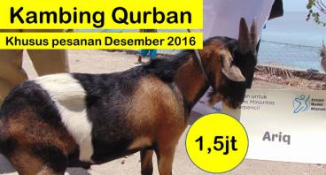 Kambing Qurban 1,5 juta khusus Desember 2016