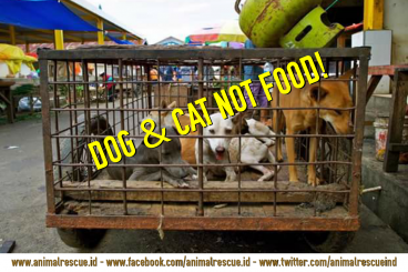 Save Dog and Cat from Extrem Market Tomohon