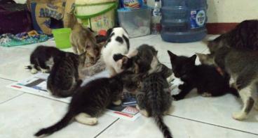 Bantu Memberi Makan Kucing Liar/Street Feeding