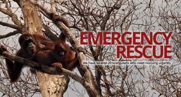 Jacqui Selamatkan Habitat Orangutan