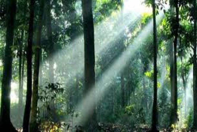 Pengelolaan Hutan Lestari Berbasis Masyarakat