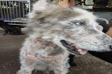 Donasi Hewa-hewan terlantar (Stray Animals)