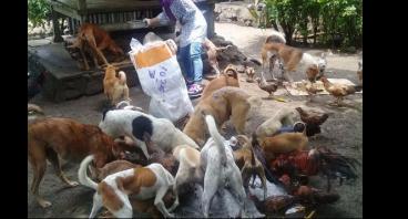 Bantu Rawat/Obati stray dog and cat di Lombok