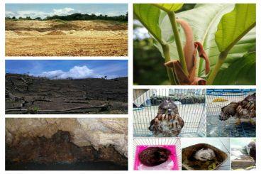 Selamatkan Ekosistem Karst Nusakambangan