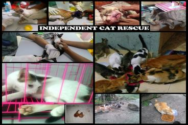 Donasi Independent Cat Rescue