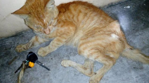 Download 61+  Gambar Kucing Kuning Paling Baru HD