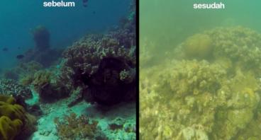 Selamatkan Pulau Bangka