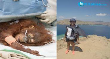 Tanggal 31 Juli Untuk si Cantik (Orangutan)