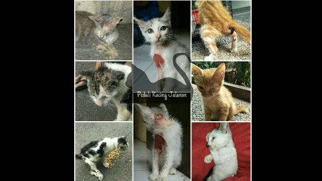 Donasi Peduli Kucing Jalanan