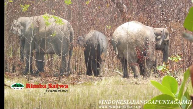 Ayo Dukung Penyelamatan Gajah Sumatera