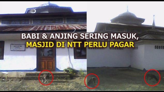BABI & ANJING SERING MASUK, MASJID NTT PERLU PAGAR