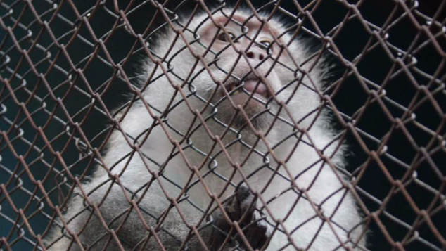 New Home for Edward The Monkey