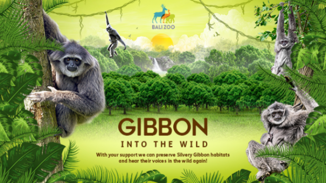 Silvery Gibbon into The Wild