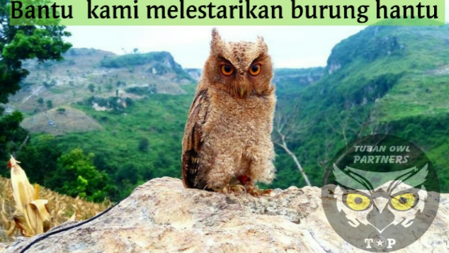 Download 700+ Foto Gambar Burung Hantu Dalam Sangkar HD Terbaru Gratis