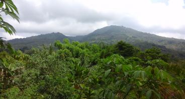 Selamatkan Hutan & Serindit Flores