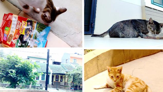 Bantu Kucing-Kucing Liar Ini Makan Setiap Hari
