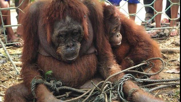 Bantu Conservation Camp demi Konservasi Indonesia!