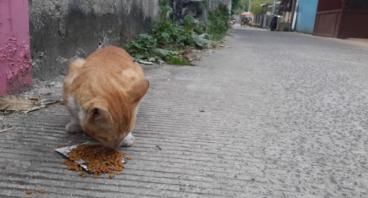 Gerakan Peduli Kucing Terlantar
