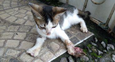 Bantu Operasi Amputasi Kaki Anak Kucing Liar