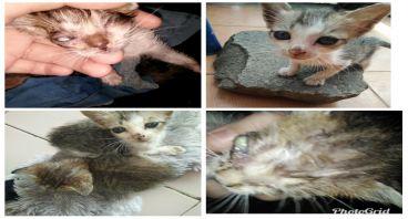 Save Stray Cats