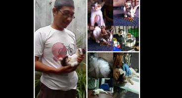 Bantu si Kucing yg Menderita,Terlantar&Terabaikan;
