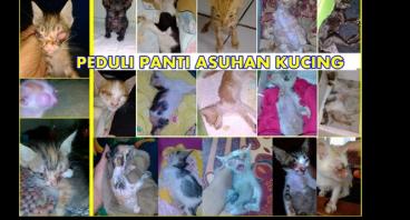 Donasi Steril dan Vaksin Panti Asuhan Kucing