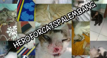 Bantu Kami Mengontrak Rumah Singgah Kucing Lagi