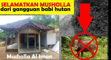 Selamatkan Musholla dari Gangguan Babi Hutan