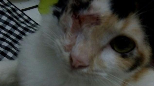 Bantu Jesi, Si Kucing Jalanan Hidup Normal Kembali