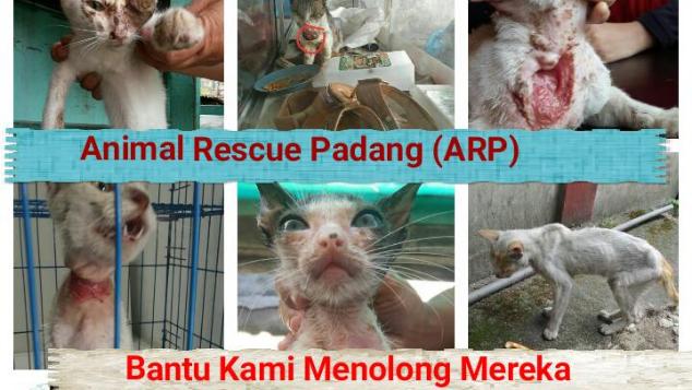 Selamatkan Kucing liar dan terlantar di Padang